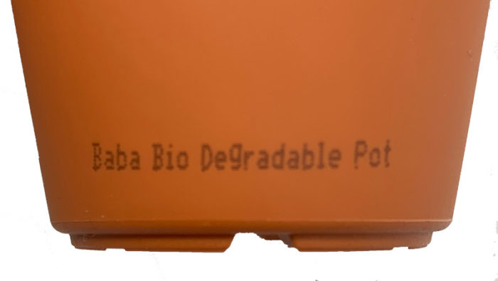 Biodegradable bottom of Pot